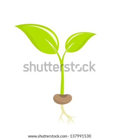Little plant seedling. Vector illustration - stock vector