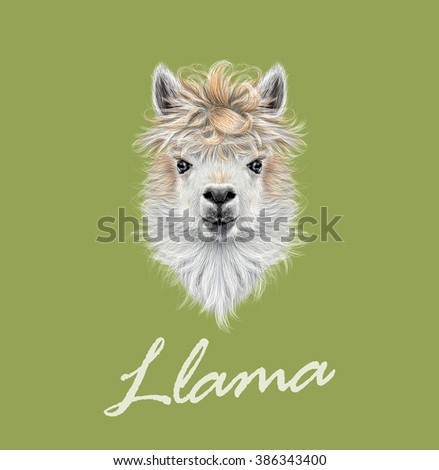 Llama animal portrait. Vector illustrated portrait of Llama or Alpaca on green background. - stock vector