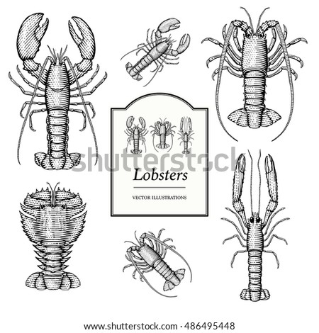 Slipper Lobster Coloring Page