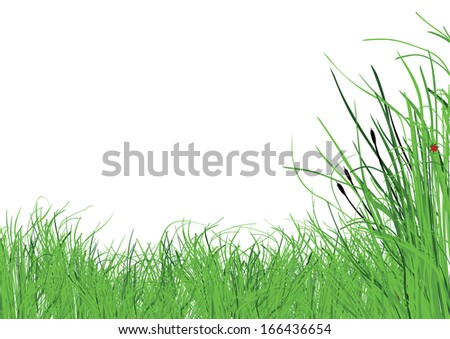 lots of lush grass with a white background - stock vector