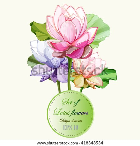 Lotus flowers with leaves. Set of design elements. Can be used in design, appearance, cards, wreath and etc. Hand drawn. All elements are separated and easy to move. Vector - stock vector