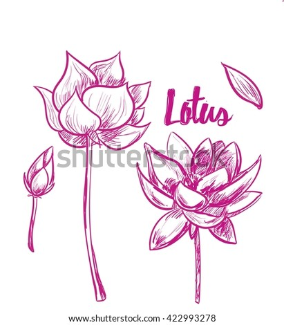 Lotus. Vector hand drawn illustrations for art, design and advertising