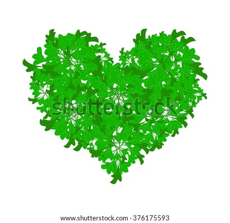 Love Concept, Illustration of Green Parsley Leaves in A Heart Shape Isolated on A White Background.