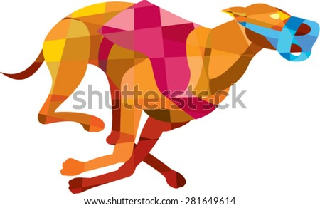 Low polygon style illustration of a greyhound dog racing with mouth guard viewed from the side set on isolated white background. - stock vector