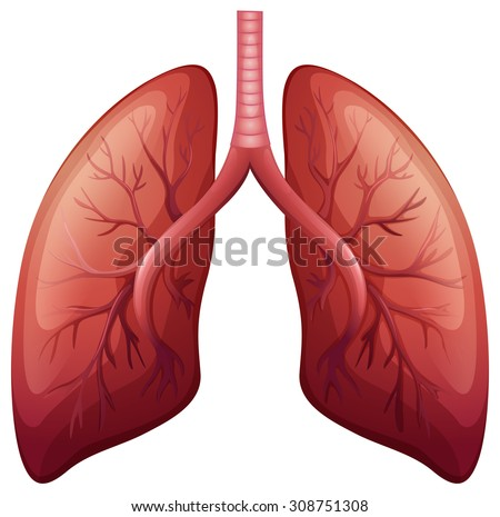 Lung cancer diagram in detail illustration - stock vector