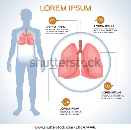 Lung. Modern medical infographics. Internal organs in a human body. Anatomy of people - stock vector