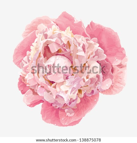 Luxurious pink peony flower painted in pastel colors - stock vector
