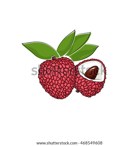 Lychee Isolated on White Background, Tropical Fruit Lichi, Vector Illustration