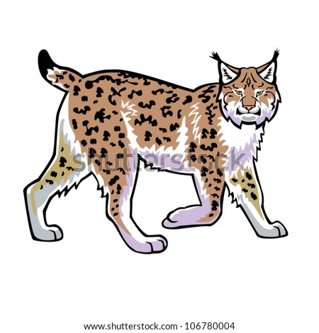 lynx ,bobcat,vector image isolated on white background,side view - stock vector
