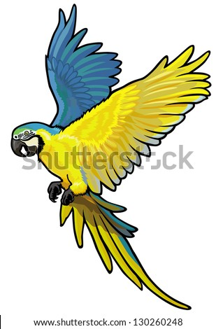 macaw, ara ararauna, blue and yellow parakeet of amazon rainforest, picture isolated on white background, vector illustration - stock vector
