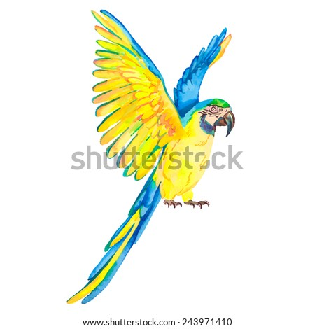 Macaw isolated on white background. Tropical parrot. Exotic. Vector for your design. - stock vector