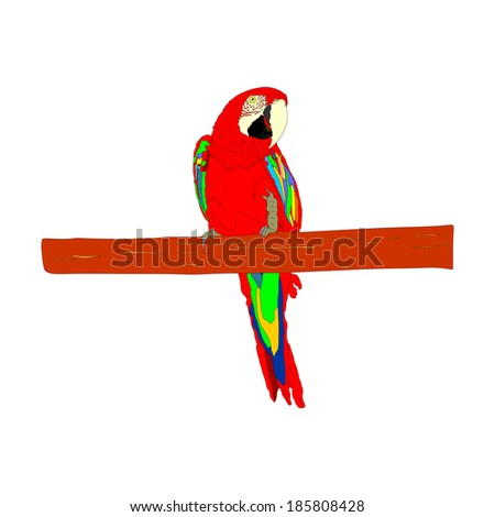Macaw parrot vector isolated on white background illustration. Sitting Ara realistic vector portrait. Beautiful Pet Parrot.  - stock vector