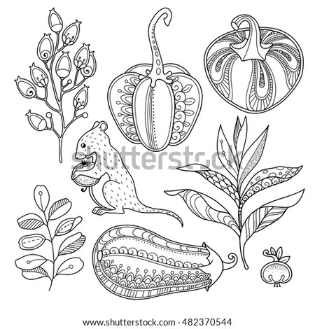 Magic garden objects set in doodle style. Floral, ornate, decorative, tribal vector design elements. Black and white monochrome background. Pumpkins, berries and leaves. Zentangle coloring book page