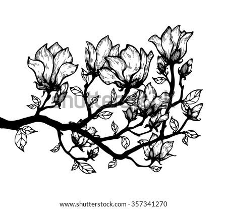 Magnolia blossom tree branch. Floral engrave. Hand drawn artwork. Love bohemia concept for wedding, bridal invitation, card, ticket, boutique logo label. Black and white. Coloring book page for adult - stock vector