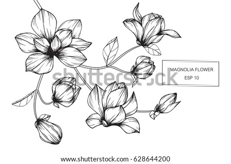 Magnolia flowers drawing sketch lineart on stock vector 628644200 magnolia flowers drawing and sketch with line art on white backgrounds mightylinksfo