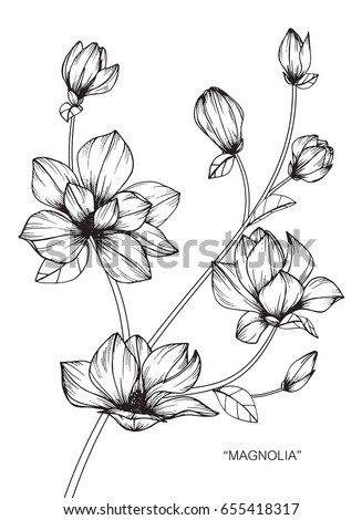 Flower drawings in black and white coloring pages for teens plant magnolia flowers drawing and sketch with lineart on white backgrounds mightylinksfo