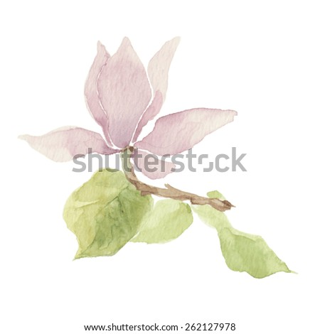Magnolia isolated on a white background.Vector, watercolor hand drawn  illustration. - stock vector