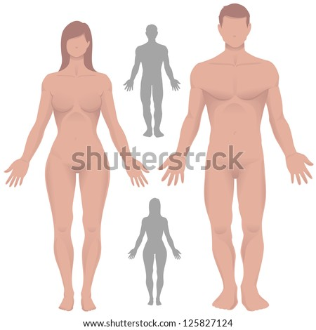 Male and female anatomy. - stock vector