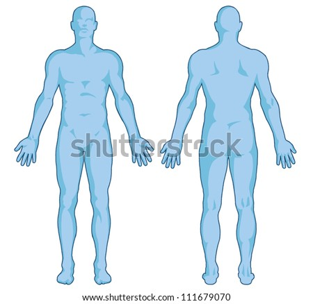 Male body shapes � human body outline � vector - posterior and anterior view - full body - stock vector