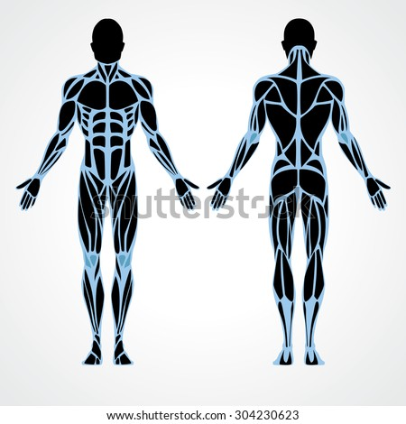 muscle stock images, royalty-free images & vectors | shutterstock, Muscles