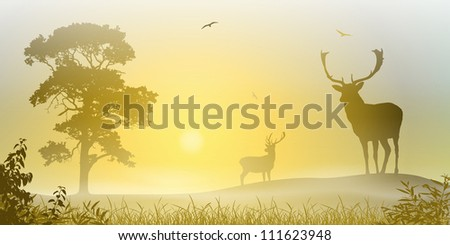 Male Stag Deer on a Misty Meadow with Tree and Sunset, Sunrise