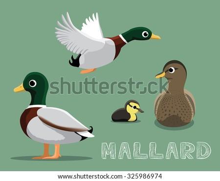 Mallard Cartoon Vector Illustration - stock vector