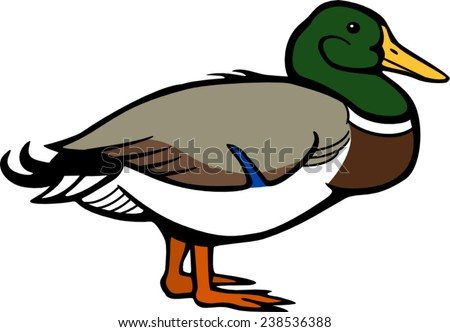 stock images  royalty free images   vectors shutterstock mallard duck clipart vector file Mallard Duck Flying Clip Art