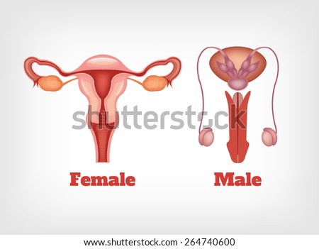 Man and woman reproductive system. Vector icon set