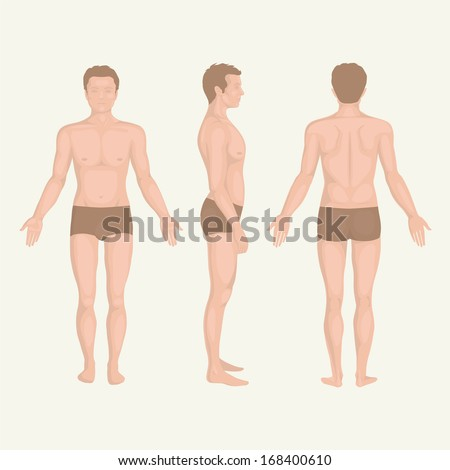 man body anatomy, front, back and side standing vactor human pose  - stock vector