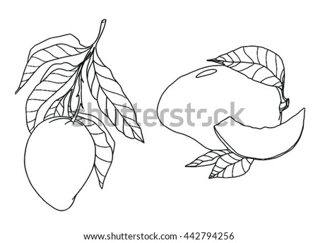 mango coloring vector outline fruit