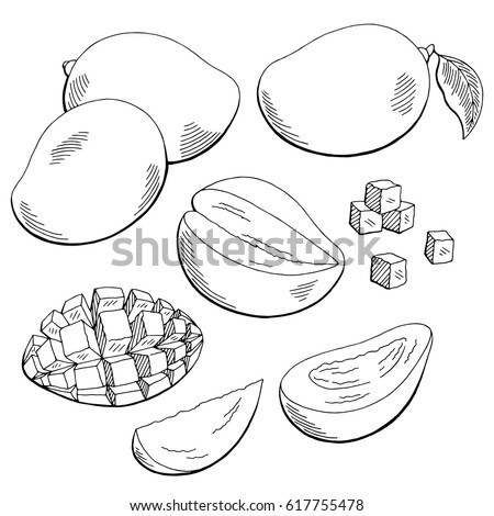 Mango fruit graphic black white isolated sketch illustration vector