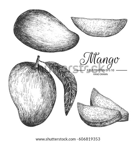 Mango hand drawn collection by ink and pen sketch.