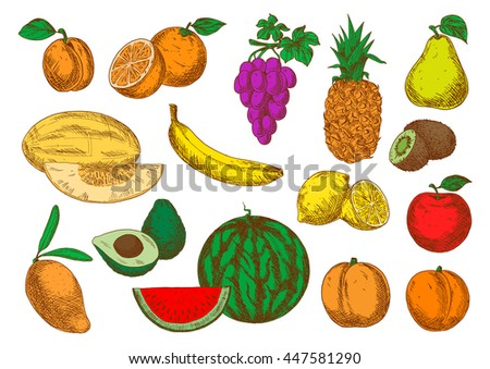Mango, peaches and melon, banana, orange and apple, violet grapes, pineapple and lemon, pear, apricot and watermelon, avocado and kiwi fruits sketch symbols - stock vector