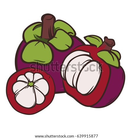 Mangosteen fruit and a half. Isolated objects. Mangosteen fruit logo. Hand drawn vector illustration on white background. Healthy food. Vitamin food. For brochures, banner, restaurant menu and market