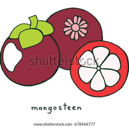 mangosteen fruit coloring page graphic vector colorful doodle art for coloring books for adults