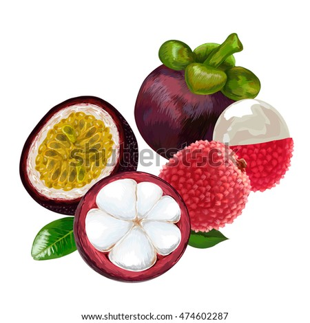 Mangosteen, lychee, passion fruit.  lychee fruit pattern. Vector illustration. mangosteen half with slices.