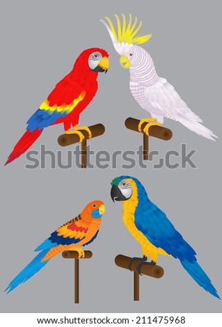 many parrot and macaw.  - stock vector