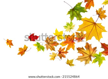 Maple autumn falling leaves, vector illustration. - stock vector