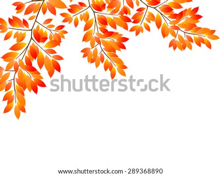 Maple foliage background