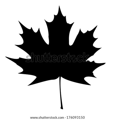 Maple Leaf Silhouette for your design. EPS10 vector illustration. - stock vector
