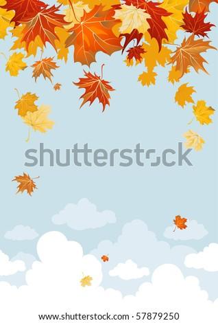 Maple leaves - stock vector
