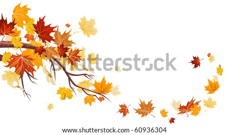 Maple leaves - stock vector