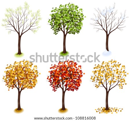 Maple Tree. Isometric trees in vector (Four Seasons series)