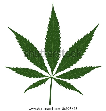 Marijuana (Cannabis) - Hemp leaf illustration, Vector