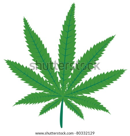 Marijuana green leaf