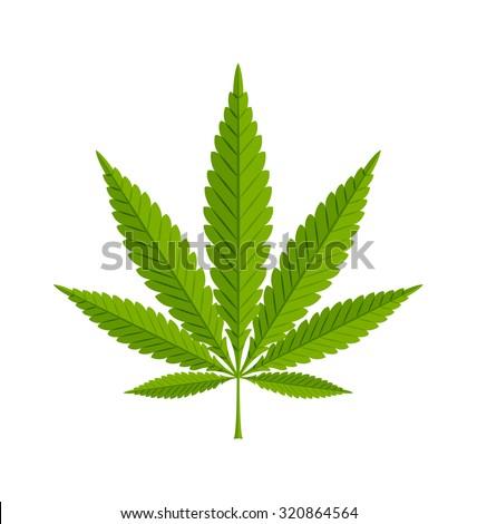 Marijuana hemp (Cannabis sativa or Cannabis indica) leaf on white background - stock vector