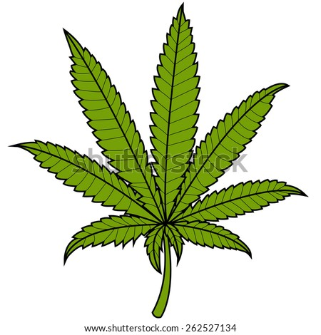 Marijuana leaf on white background. Vector Illustration of a marijuana cannabis leaf on white background, isolated - stock vector