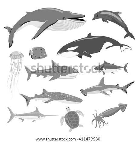 Marine fauna set of aquatic animals. Aquatic fauna, ocean or sea fish wildlife fauna, underwater aquarium exotic life fauna, dolphin water wild vector illustration isolated on white - stock vector
