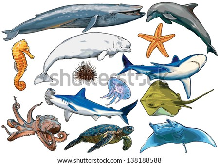 marine, sea, aquatic animals of ocean and marine species, sea creatures - stock vector