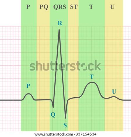 Marking scheme of ECG on grid paper, ekg graph, 2d medical vector chart, eps 10 - stock vector